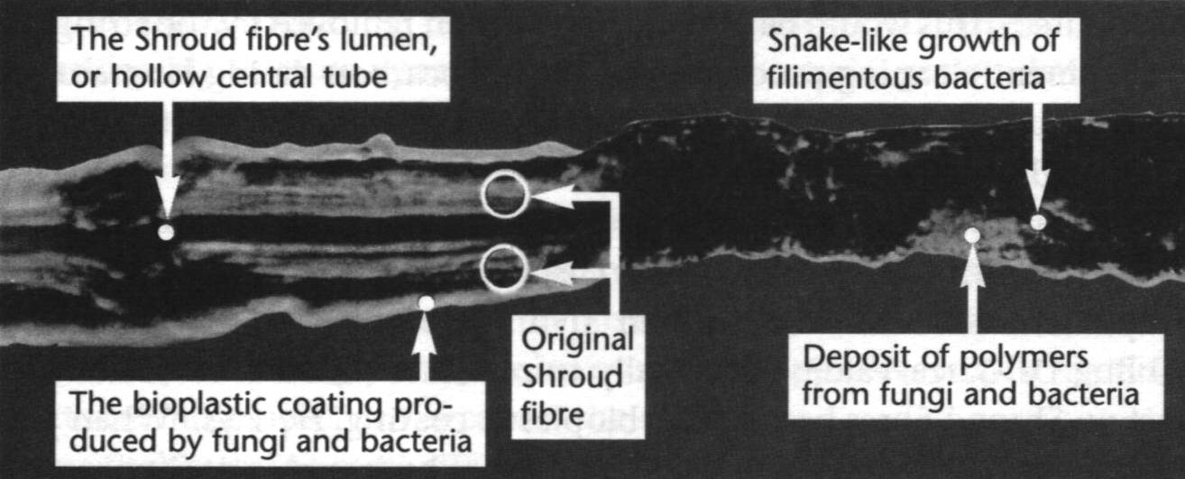 shroud carbon dating The shroud of turin may be the real burial cloth of jesus the carbon dating, once seemingly proving it was a medieval fake, is now widely thought of.